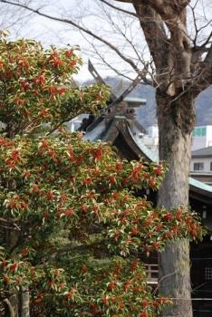 赤実の木.jpg