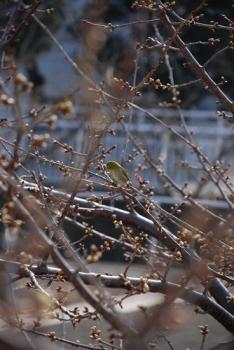 ミドリの鳥.jpg