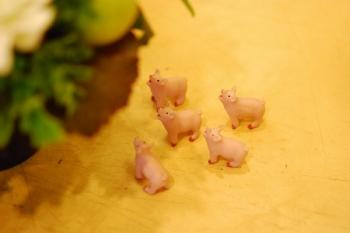 子豚.jpg