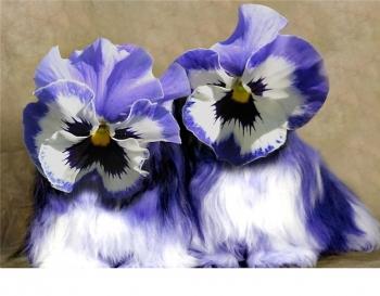 Violet Pansy.jpg